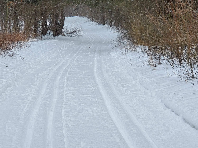 The dedicated classic-only trail system at Huron Meadows was in good shape on Sunday. The picture shows a section of the Beech Alley trail south of Hammel Road.