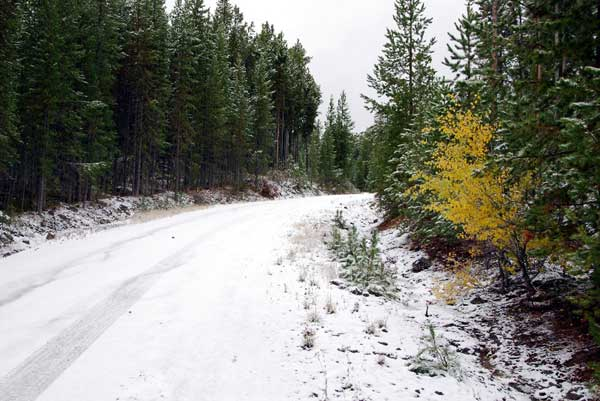 Snow in West Yellowstone