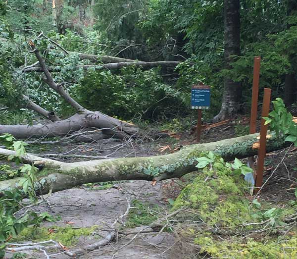 Sleeping Bear Heritage Trail is impassable due to down trees