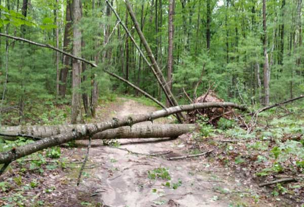 Wind blew down roughly 500 tress on the Vasa Pathway alone