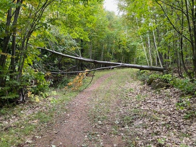 Trees cut down over cross country ski trails at Suicide Bowl