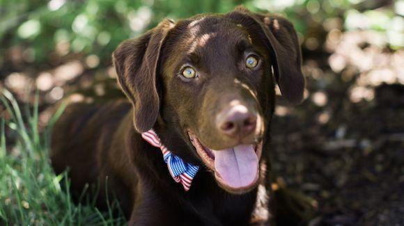 Champ is a five-month-old rescue puppy from the Humane Society of Utah